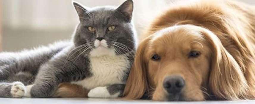 Este miércoles la dignidad de los animales de compañía se debatirá en el Concejo de Armenia