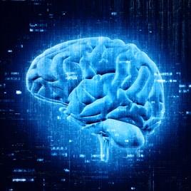 Seminario de neurodidáctica
